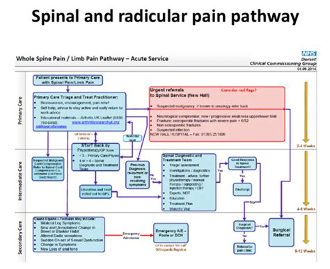 Mechanical Back Pain | Musculoskeletal Knowledge Hub