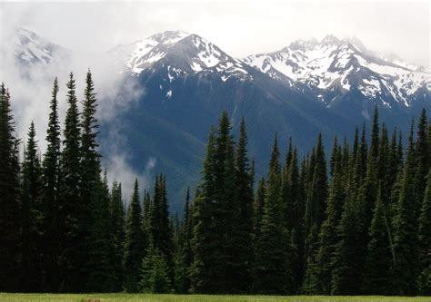 Forest Protection-The Olympic Peninsula — Read The Dirt
